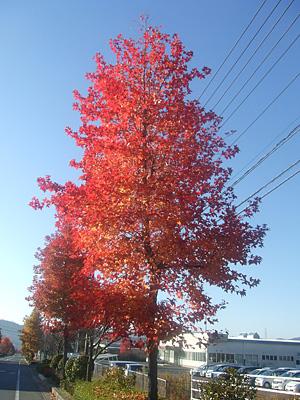東広島工場前の紅葉2