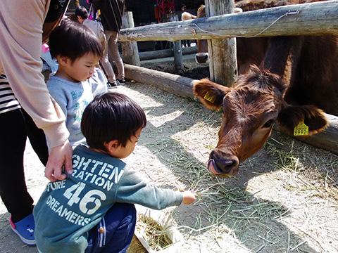 牧草をあげる子供たち