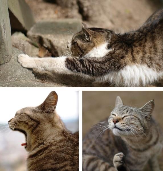 伸びやあくびをする尾道の猫たち
