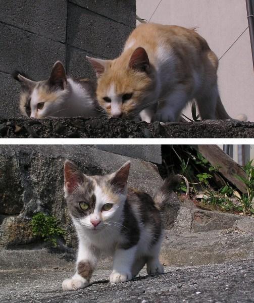 尾道の猫たちを猫の視点で撮ってみる