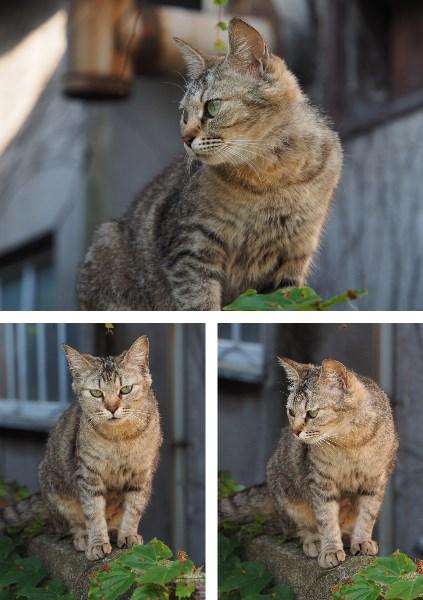 尾道の猫たちは表情が豊か2