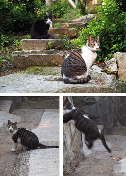 尾道の猫の細道にいる猫たち。