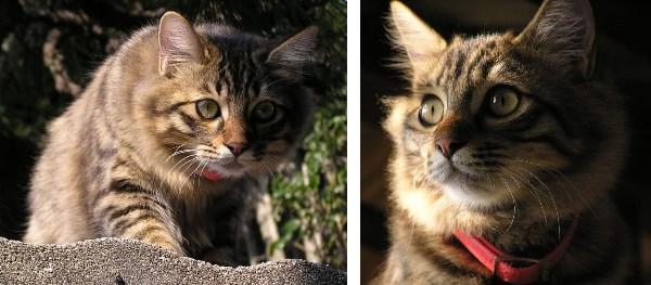 尾道の猫たちは表情が豊か